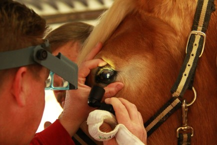 equine eye exam